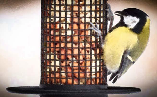 Fågelbord